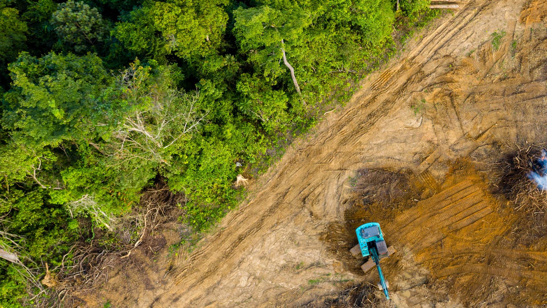 Analiza investigación CIDE herramientas legales de movimientos ambientalistas en México y Brasil